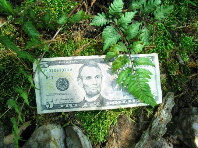 Фото - Чому американські гроші зелені?