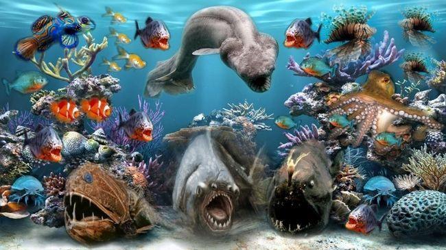 Види морських тварин