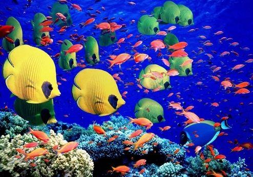 морські тварини, назви